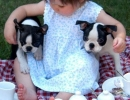 Sharing together | 10 Beautiful Baby - Dog Friendships - Tinyme Blog