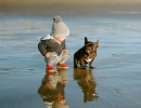Cute Critter | 10 Beautiful Baby - Dog Friendships - Tinyme Blog