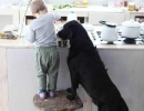 Cooking together | 10 Beautiful Baby - Dog Friendships - Tinyme Blog