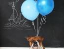 Coolest baby boy announcement | 10 Creative Gender Reveal Ideas - Tinyme Blog
