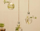Hanging light bulb planter | 10 DIY Vertical Gardens - Tinyme Blog