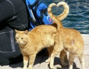 TAIL me what LOVE is...   10 Perfectly Timed Photos - Tinyme Blog